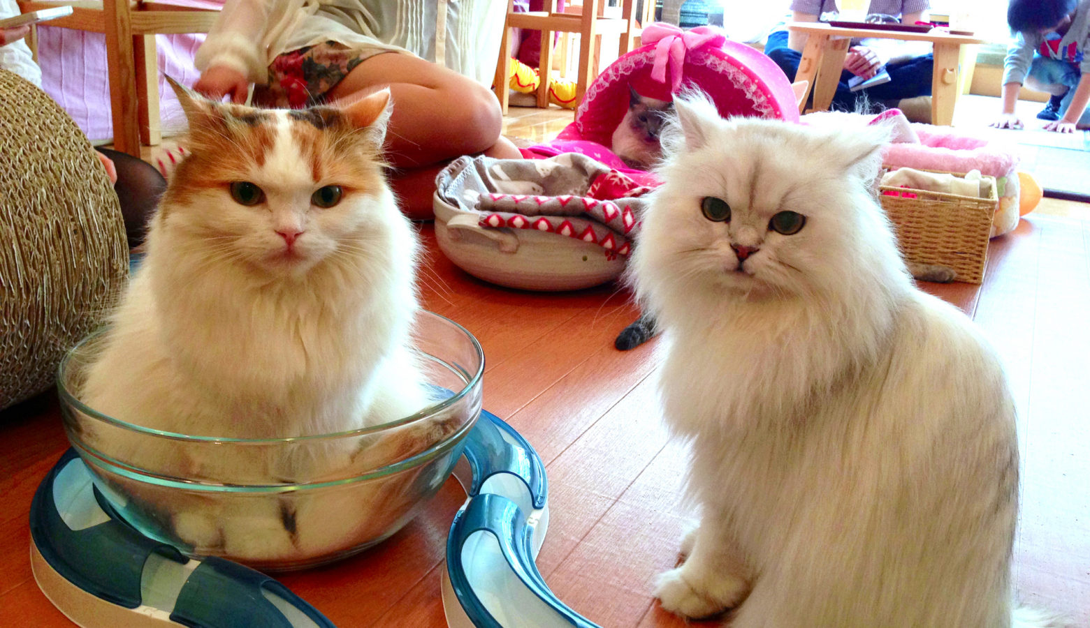Two Cats Cafe Muncie Menu