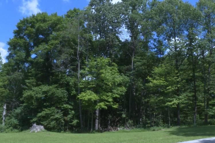 Trees near the DNR Fire Headquarters (Rebecca Thiele/IPB News)