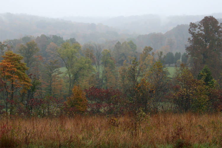 Hoosier National Forest in Orange County (Wikimedia Commons)