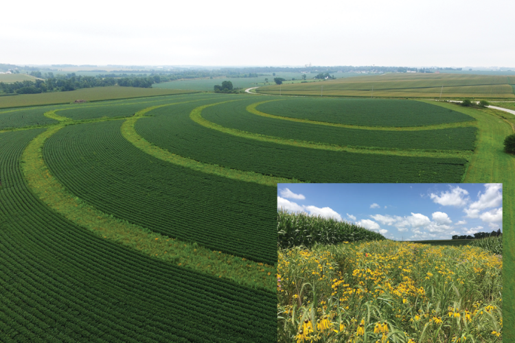 The report says row crops alternated with strips of native prairie improves biodiversity while also preventing runoff and nutrient loss (Main photo: Lynn Betts, Inset: Farnaz Kordbacheh. U.S. Global Change Research Program)