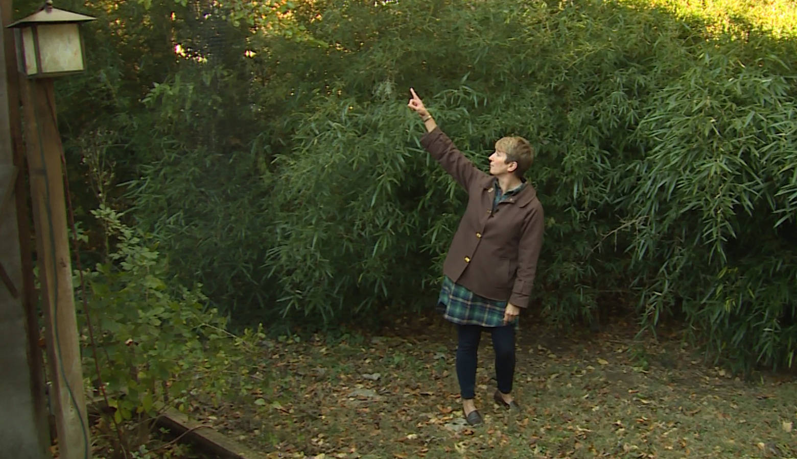 Rules Restricting Bamboo Planting