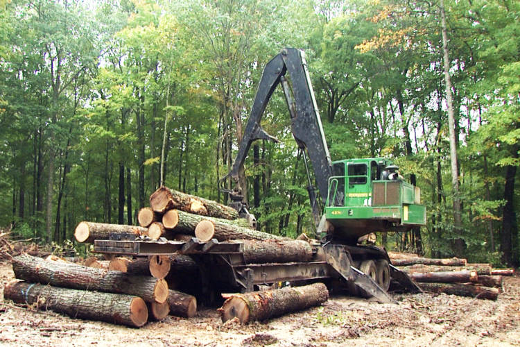 A stack of wood sits in the Yellowwood State Forest where logging is taking place. (WFIU/WTIU)