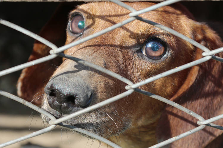 Legislation requires animal shelters to humanely euthanize animals.  (Pixabay)