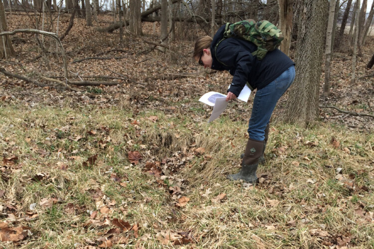 An Indiana Department of Environmental Management employee inspects an area in Hamilton County where an agricultural tile has been damaged, causing what they call an isolated wetland to form over time, 2017. (Courtesy of IDEM)
