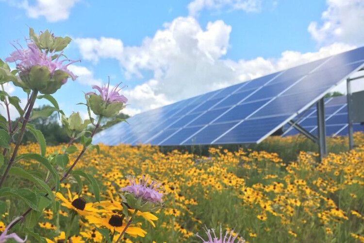 Native plants near a solar panel. (Courtesy of Fresh Energy)