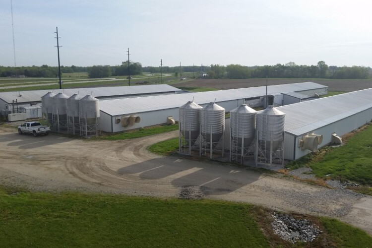 A CAFO off Route 25 in Tippecanoe County. (FILE PHOTO: Annie Ropeik/IPB News)