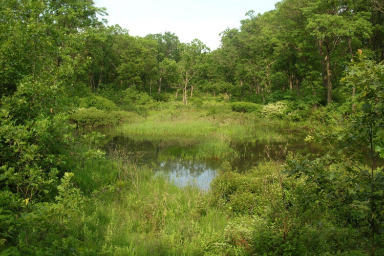 An interdunal wetland at Miller Woods in Indiana Dunes National Park, 2011. (Wikimedia Commons)